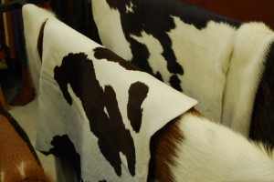 Das geht auf keine Kuhhaut - © Kevin_P, morguefile.com
