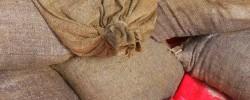 Jemandem die Hucke volllügen - © duboix, morguefile.com