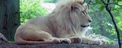 Löwenanteil - © click, morguefile.com