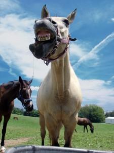 Man hat schon Pferde kotzen sehen - © markmiller, morguefile.com