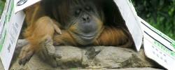 So ein Affentheater - © beglib, morguefile.com